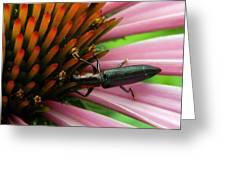 Echinacea Visitor Greeting Card
