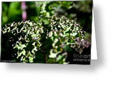 Edge Of Kale Greeting Card