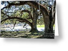 Edge Of The Green Swamp Greeting Card