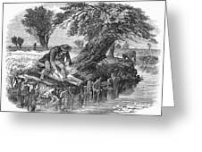 Eel Fishing, 1850 Greeting Card