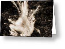 Effervescence IIi  Greeting Card