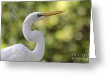 Egret Alphabet Greeting Card
