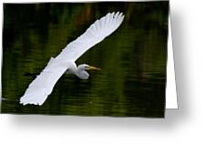 Egret And Gator Greeting Card