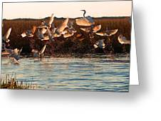 Egret And Ibis Party Greeting Card