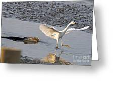 Egret Being Chased By Alligator Greeting Card