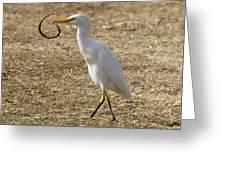Egret Captures Snake Greeting Card