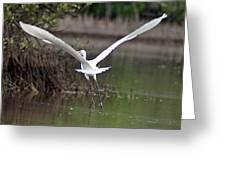 Egret In Flight Greeting Card
