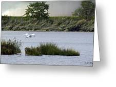 Egret Over Water Greeting Card