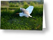Egret Passing By  Greeting Card