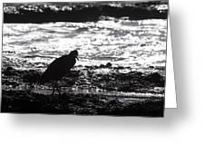 Egret Silhouette  Greeting Card