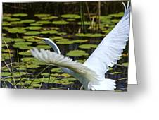 Egret Take Off Greeting Card