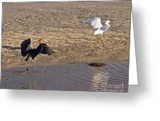 Egret Territory Greeting Card