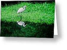 Egret Wading Greeting Card