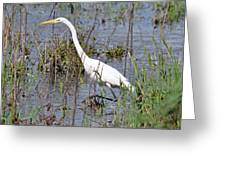 Egret Walking Greeting Card