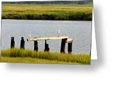 Egrets In The Salt Marsh Greeting Card