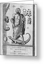 Egyptian God Anubis, 17th Century Greeting Card