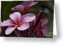Eia Ku'u Lei Aloha Kula - Pua Melia - Pink Tropical Plumeria Maui Hawaii Greeting Card
