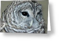 Eight Hooter Greeting Card