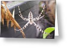 Eight Legged Friend Greeting Card