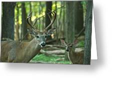 Eight Point And Fawn_9532_4367 Greeting Card