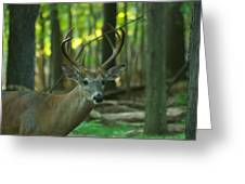 Eight Point_9531_4366 Greeting Card