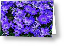 Electric Indigo Garden Greeting Card