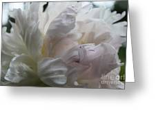 Elegance And Frills II Greeting Card