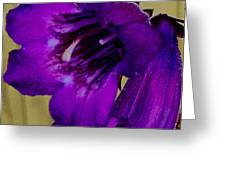 Elegance In Purple Greeting Card