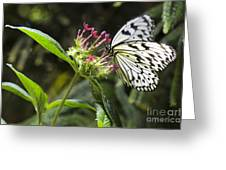 Elegance  Greeting Card by Leslie Leda