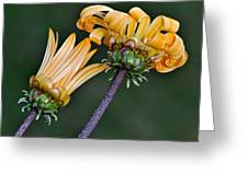 Elegant Daisies Greeting Card