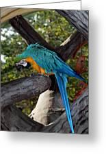Elegant Parrot Greeting Card