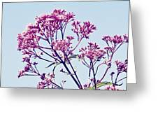 Elegant Pink Flowers. Greeting Card