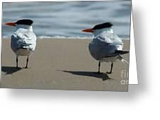 Elegant Tern Greeting Card