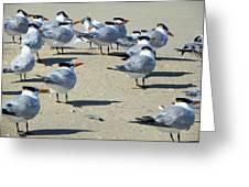 Elegant Terns Enjoying The Beach Greeting Card