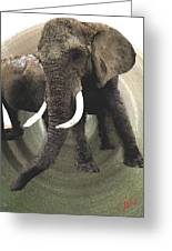 Elephant Awake Greeting Card