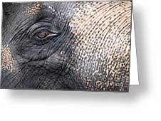 Elephant Close-up Portrait Greeting Card