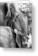 Elephant Ears Greeting Card