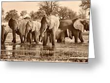 Elephant Family At Khwai Greeting Card