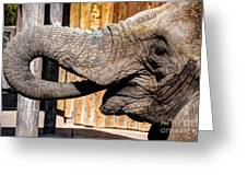 Elephant Feeding Time At The Zoo Greeting Card