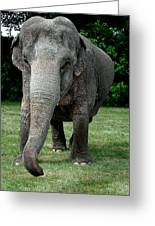 Elephant Greet Greeting Card