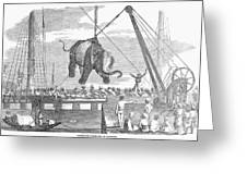 Elephant Hoist, 1858 Greeting Card