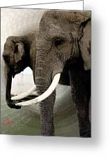 Elephant Meet Greeting Card