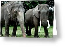 Elephant Meeting Greeting Card