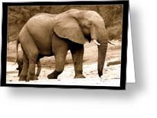 elephant of Botswana Greeting Card