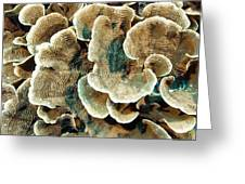 Elephant Skin Coral (pachyseris Sp.) Greeting Card by Matthew Oldfield