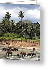 Elephants In The River Greeting Card