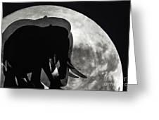 Elephants On Moonlight Walk Greeting Card