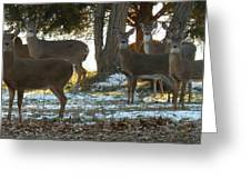 Eleven Deer Standing Greeting Card
