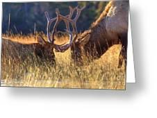 Elk 2 Elk Greeting Card
