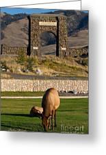 Elk At Yellowstone Entrance Greeting Card